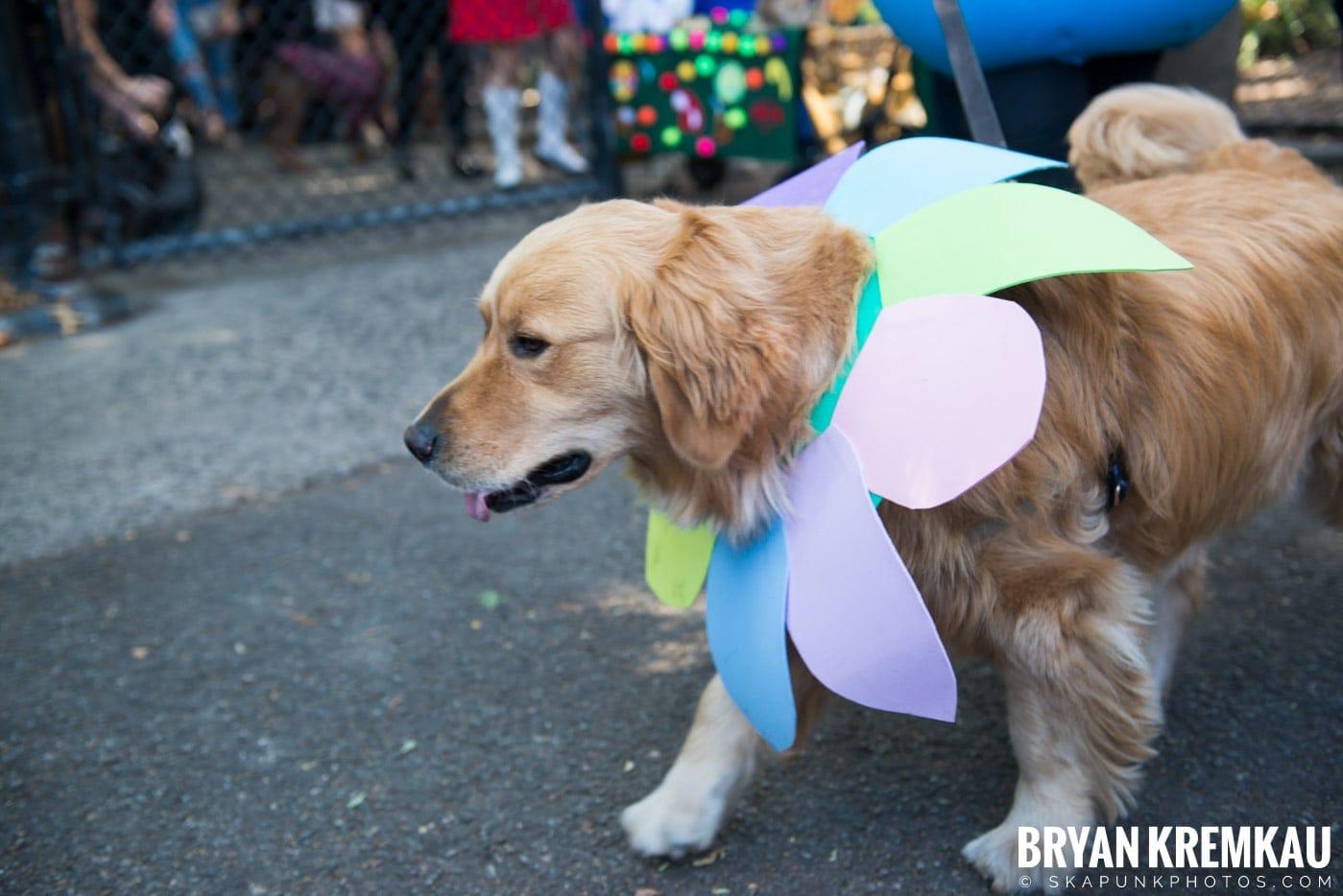 Tompkins Square Park Halloween Dog Parade 2017 @ Tompkins Square Park, NYC - 10.21.17 (9)
