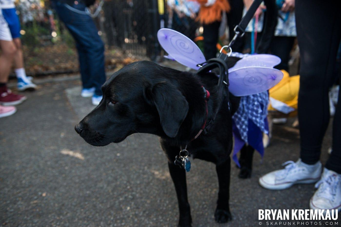 Tompkins Square Park Halloween Dog Parade 2017 @ Tompkins Square Park, NYC - 10.21.17 (8)