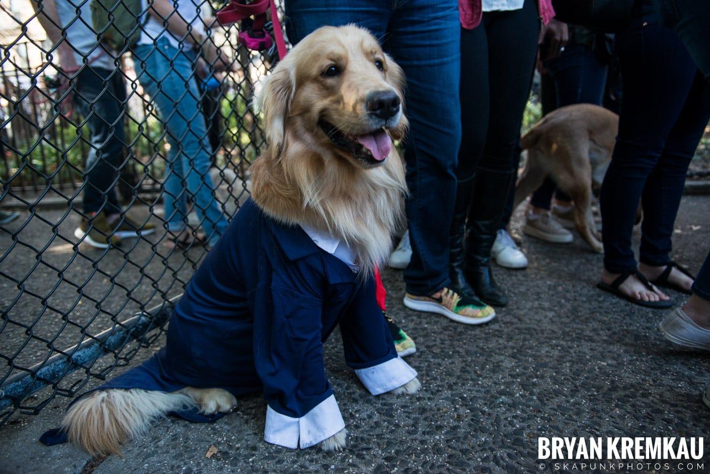 Tompkins Square Park Halloween Dog Parade 2017 @ Tompkins Square Park, NYC - 10.21.17 (4)