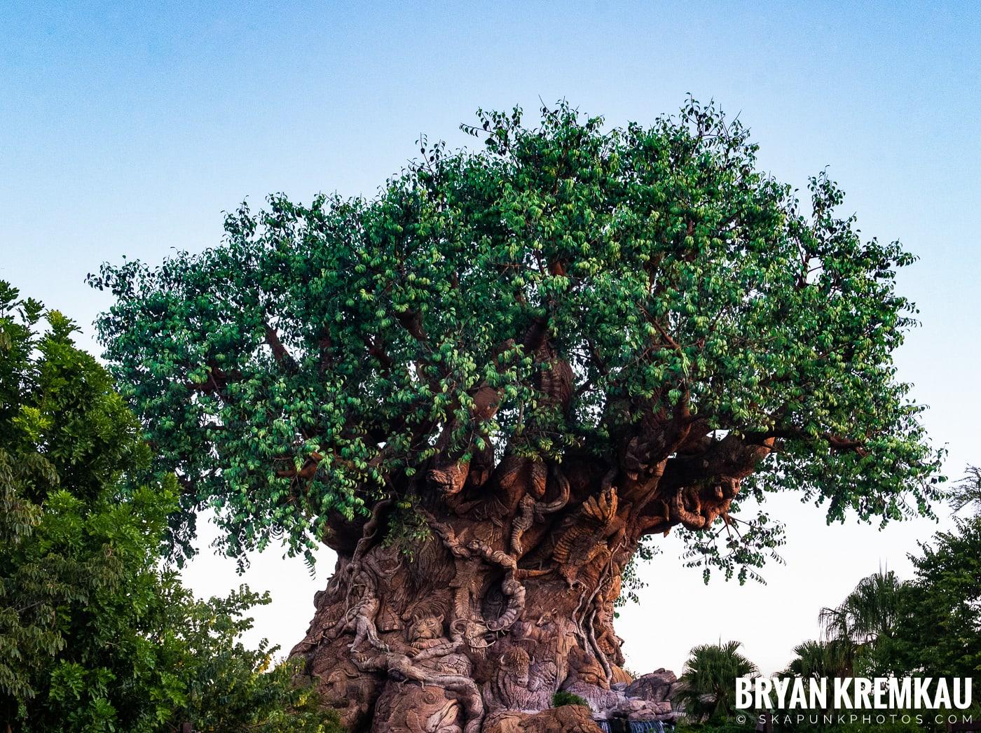Walt Disney World Vacation: Day 5 (Animal Kingdom / Disney's Hollywood Studios) - 10.3.19 (83)