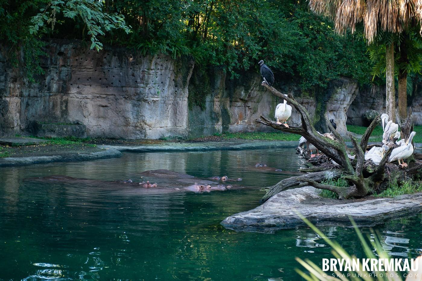 Walt Disney World Vacation: Day 5 (Animal Kingdom / Disney's Hollywood Studios) - 10.3.19 (74)