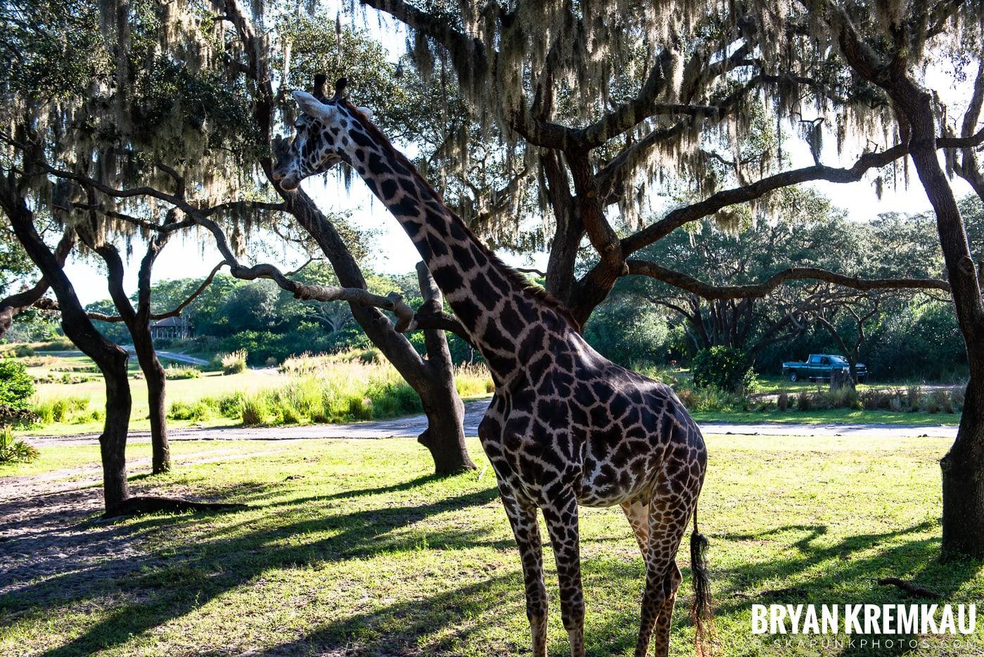 Walt Disney World Vacation: Day 5 (Animal Kingdom / Disney's Hollywood Studios) - 10.3.19 (71)