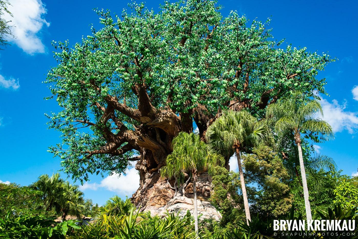 Walt Disney World Vacation: Day 5 (Animal Kingdom / Disney's Hollywood Studios) - 10.3.19 (57)
