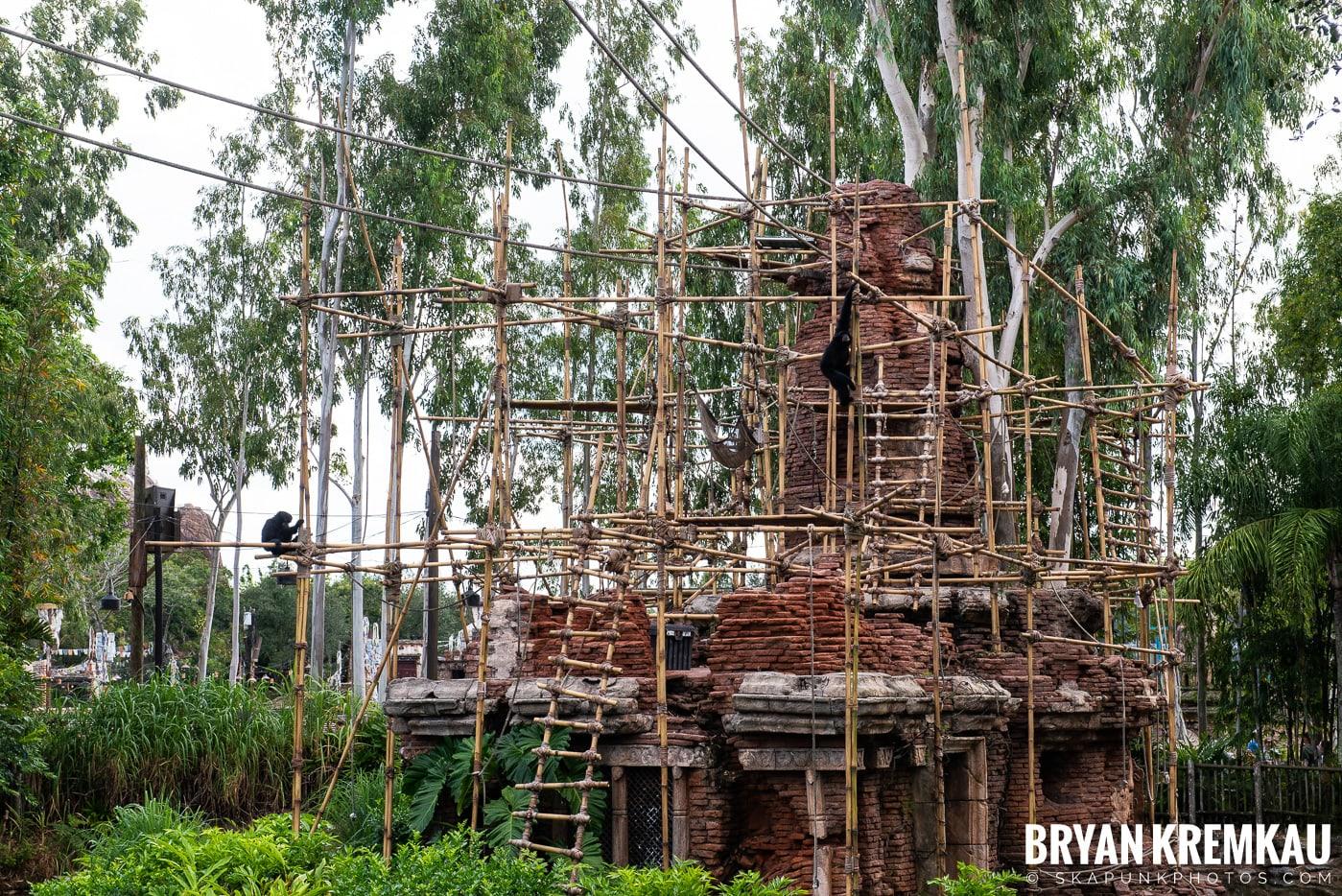 Walt Disney World Vacation: Day 5 (Animal Kingdom / Disney's Hollywood Studios) - 10.3.19 (55)